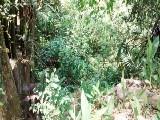 Terreno - Rio Grande Da Serra - Parque do Governardor