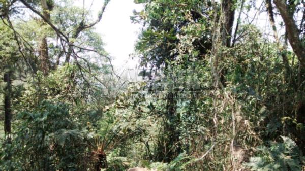 Terreno à venda em Parque Do Governardor, Rio Grande Da Serra - SP