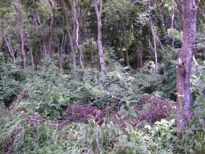 Terreno Residencial à venda em Araras, Petrópolis - Foto 3