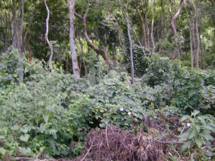 Terreno Residencial à venda em Araras, Petrópolis - Foto 2