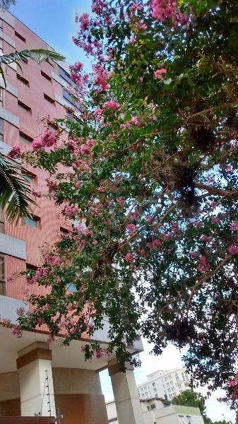 San Rafael - Apto 2 Dorm, Três Figueiras, Porto Alegre (100213) - Foto 44