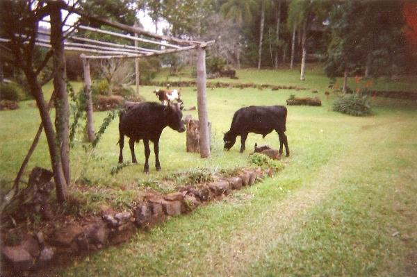 Sitio Pangaré - Sítio, Zona Rural, Gramado (103596) - Foto 2