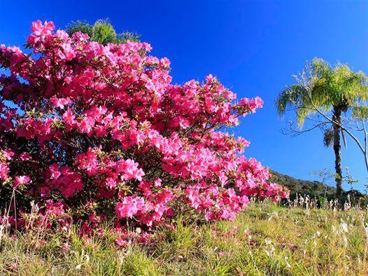 Sitio Pangaré - Sítio, Zona Rural, Gramado (103596) - Foto 4