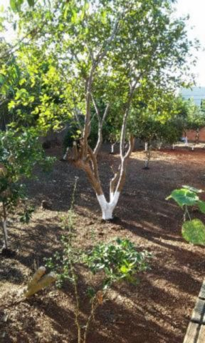 Terreno, Harmonia, Canoas (61558) - Foto 2