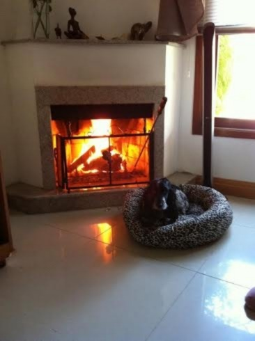 Ducati Imóveis - Casa 4 Dorm, Tristeza (98653) - Foto 4