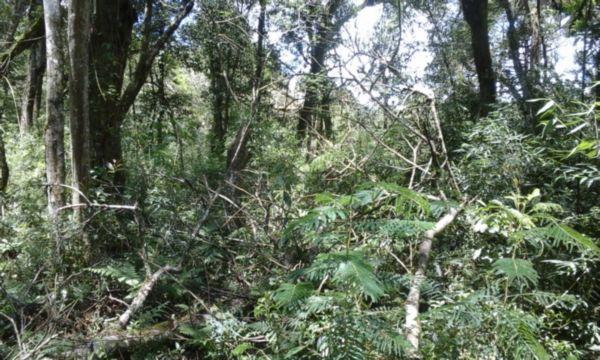 Sítio em Caxias Do Sul   Sitio