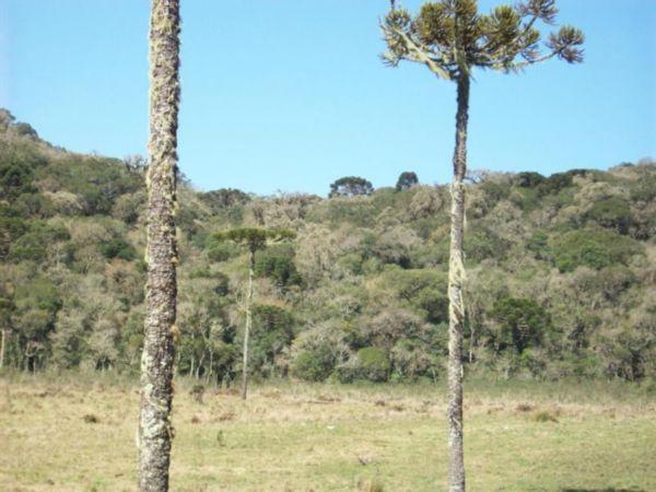 Área em Cambara Do Sul | Área