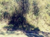 Terreno em Bento Goncalves | Loteamento Parque Piemonte | Miniatura