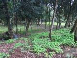 Terreno em Sao Vendelino | Terrenos | Miniatura