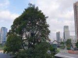 103764-Apartamento-São Paulo-Real Parque