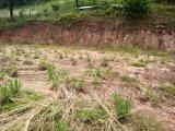 Terreno em Bento Gonçalves | Terrenos | Miniatura