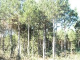 Área Rural em Campestre Da Serra | Chacara Em Campestre Da Serra | Miniatura