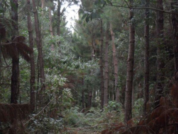 Área Rural em Campestre Da Serra | Chacara Em Campestre Da Serra