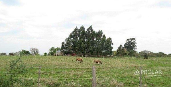 em Alegrete   Fazenda