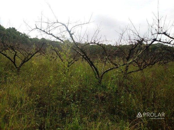 Área Rural em Bento Gonçalves | Caminhos de Pedra