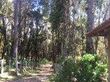 REF. 6800 -  Tijucas Do Sul -   Rodovia Br-376 Km 647, 00